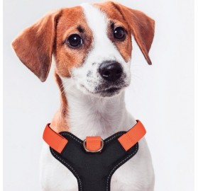 Arnés de Perro Naranja X-TRM Cronos Neón Flash Nayeco