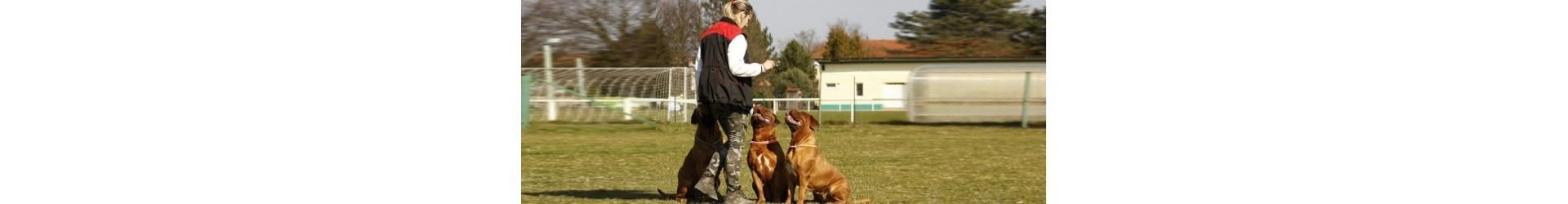 Educación y entrenamiento